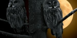 Night_owls_tree-660x330