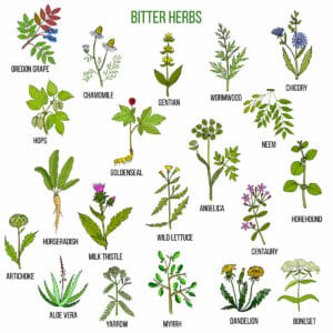 Bitter is Better:  What Bitter Means in the Herb World